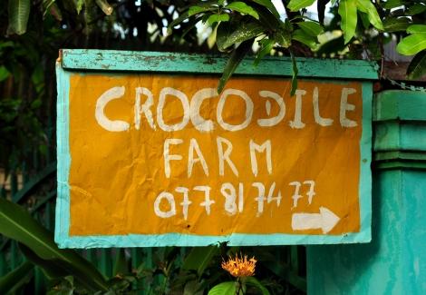 2014.10.02 - [KH] Battambang Bamboo Train, Alligator Farm (21)